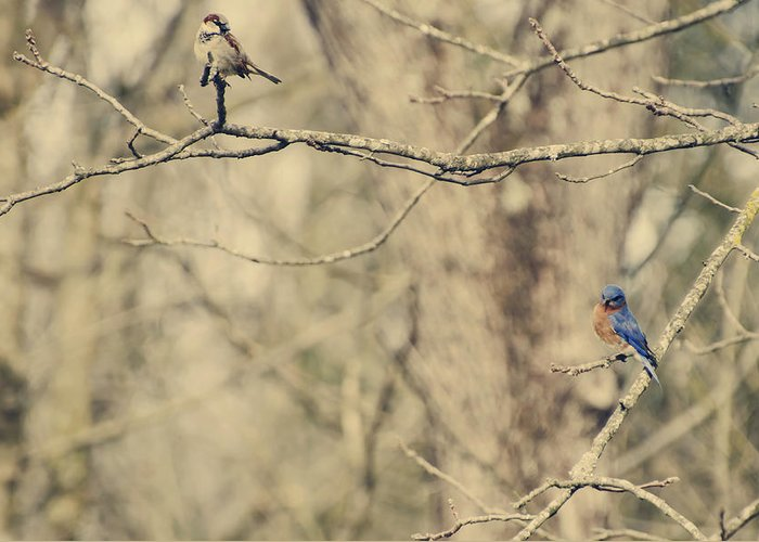 Eastern Greeting Card featuring the photograph Bluebird And Sparrow by Heather Applegate