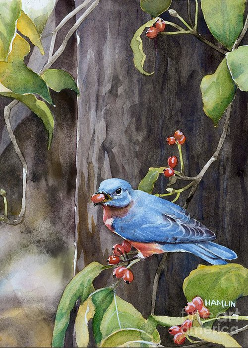 Bird Greeting Card featuring the painting Bluebird - Red Berries by Steve Hamlin