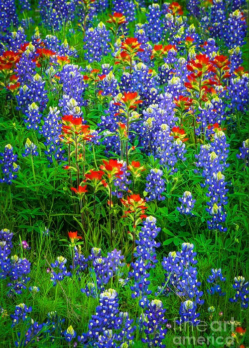 America Greeting Card featuring the photograph Bluebonnet Patch by Inge Johnsson