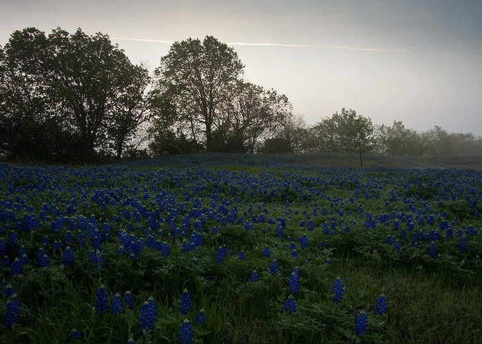 Bluebonnets Greeting Card featuring the photograph Bluebonnets On A Hazy Morning by Mark Alder