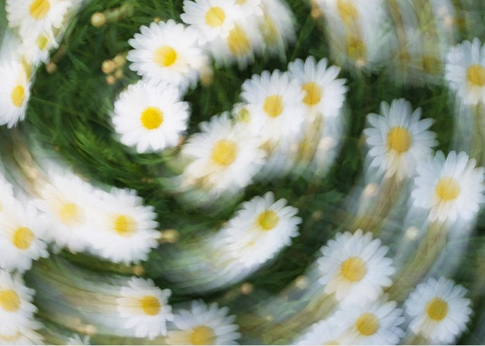 Daisy Greeting Card featuring the photograph Blurred Daisies by Chevy Fleet