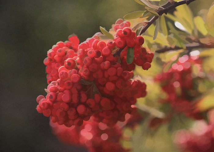 Interior Design Art Greeting Card featuring the photograph Blushing Berries by Kandy Hurley