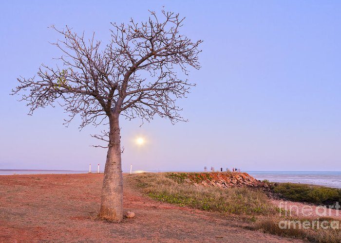 Australia Greeting Card featuring the photograph Boab Tree And Moonrise At Broome Western Australia by Colin and Linda McKie