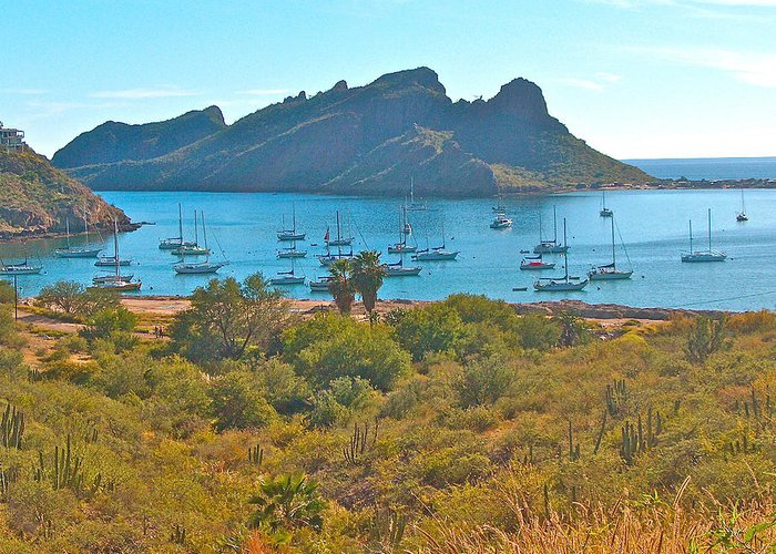 Boats In San Carlos Harbor Greeting Card featuring the photograph Boats In San Carlos Harbor-sonora-mexico by Ruth Hager