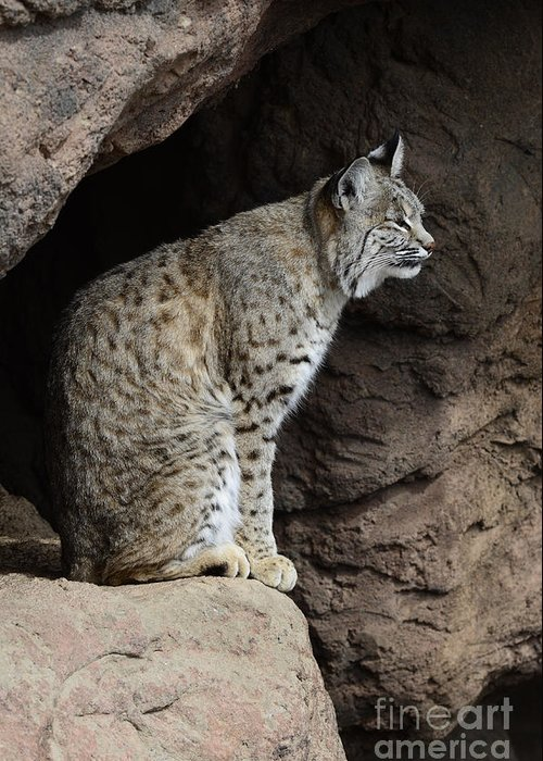 Bobcat Greeting Card featuring the photograph Bobcat by Bob Christopher