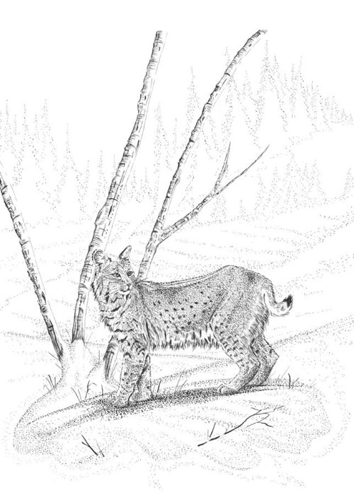 Lynx Drawings Greeting Card featuring the drawing Bobcat by Carl Genovese