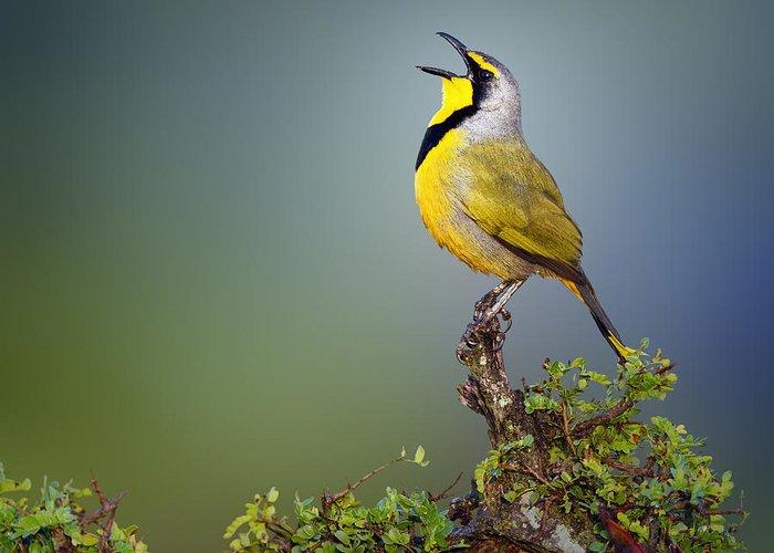 National Bird Greeting Cards