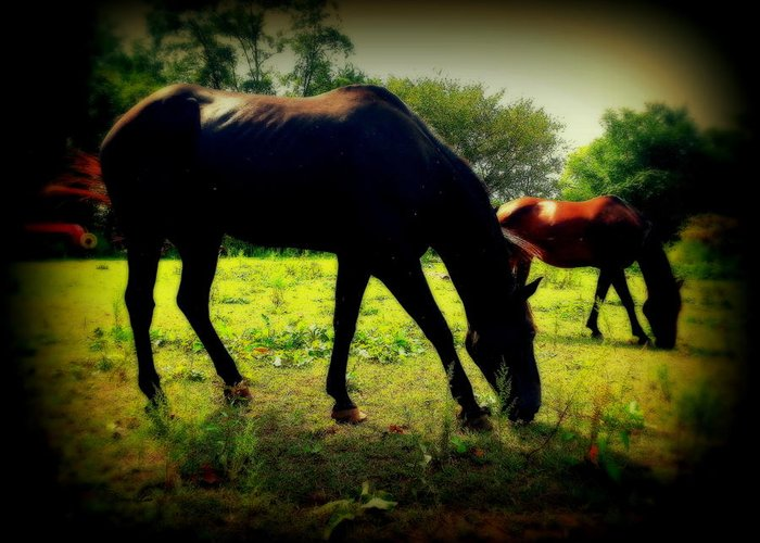 Horses Greeting Card featuring the photograph Bold by Diane Leo