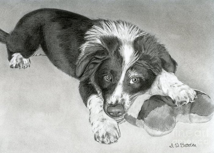 Border Collie Greeting Card featuring the drawing Border Collie Puppy by Sarah Batalka