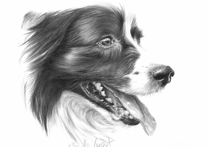 Dog Greeting Card featuring the drawing Border Grin by Sheona Hamilton-Grant