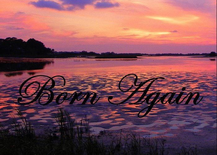 Cedar Key Greeting Card featuring the photograph Born Again by Sheri McLeroy