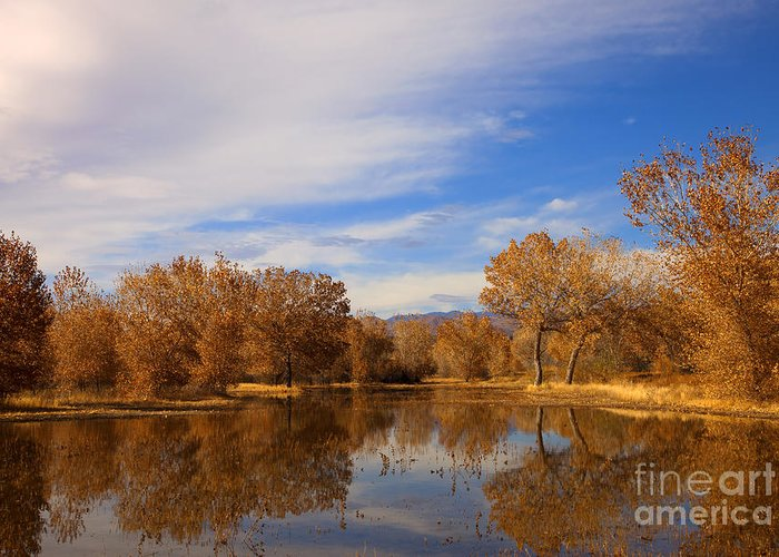 Bosque Del Apache Greeting Card featuring the photograph Bosque Del Apache Reflections by Mike Dawson