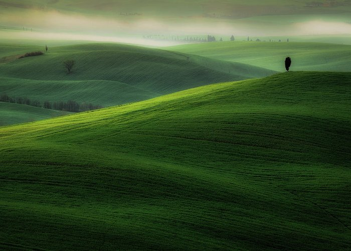 Cypress Greeting Card featuring the photograph Boss by Marek Boguszak