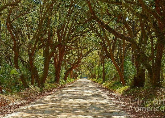 Edisto Greeting Card featuring the photograph Botany Bay Road On Edisto Island by Melanie Snipes