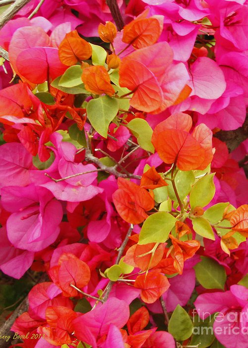 Easter Sunday Flowers 2013 Greeting Card featuring the photograph Bougainvillea Multi-colored Flowers by Kenny Bosak