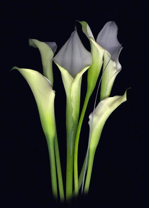 Calla Greeting Card featuring the digital art Bouquet of Callas by Sandi F Hutchins