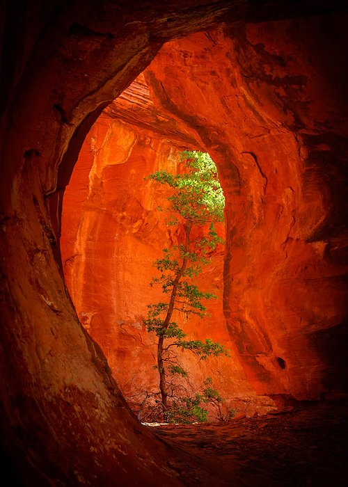 Sedona Greeting Card featuring the photograph Boynton Canyon 04-343 by Scott McAllister