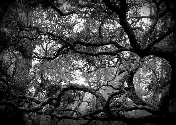 Tree Greeting Card featuring the photograph Branch Out by Sheri McLeroy