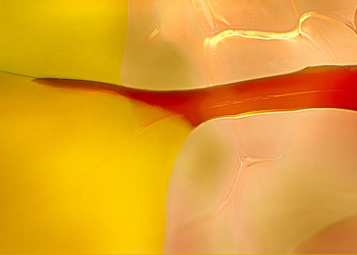 12.11 Greeting Card featuring the photograph Branches Of Light by Omaste Witkowski
