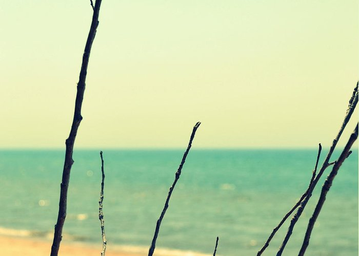 Beach Greeting Card featuring the photograph Branches On The Beach by Michelle Calkins