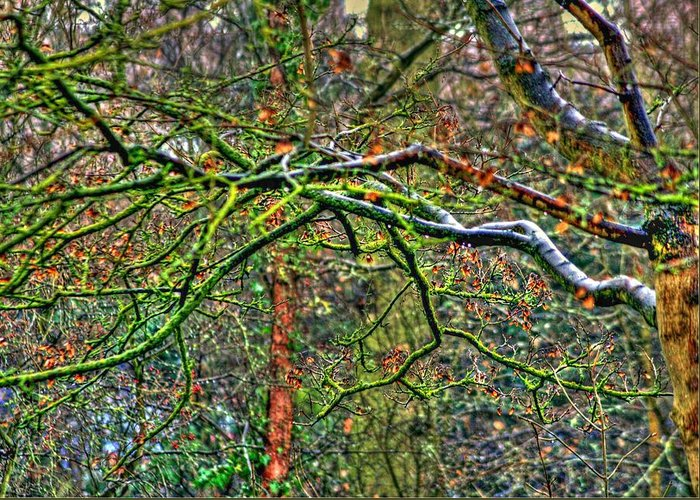Branches Greeting Card featuring the photograph Branching Out by David Valentyne