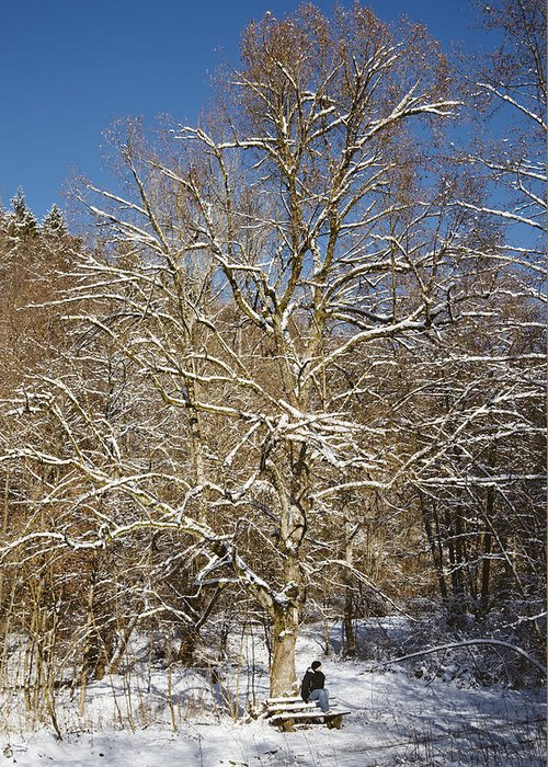 Winter Greeting Card featuring the photograph Break Under A Large Tree - Sunny Winter Day by Matthias Hauser