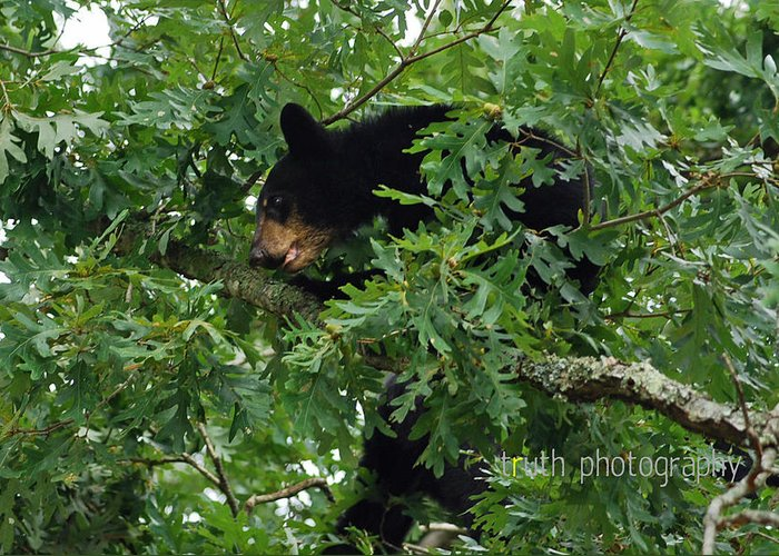 Black Bear Greeting Card featuring the photograph Breakfast For Bear by Ruth Tillman