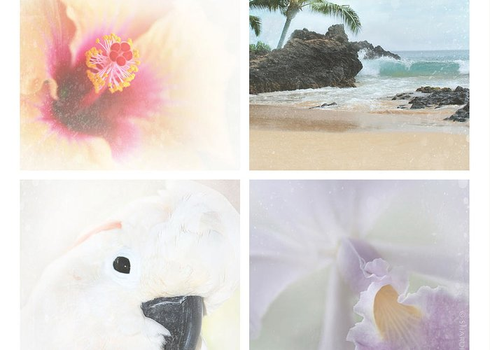 Aloha Greeting Card featuring the photograph Breathe . Feel The Wind . . . by Sharon Mau