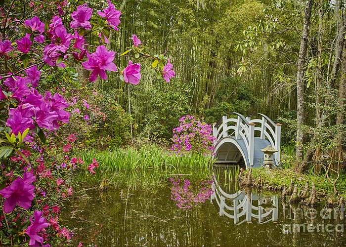 White Bridge Greeting Card featuring the photograph Bridge At Magnolia Plantation by Carrie Cranwill