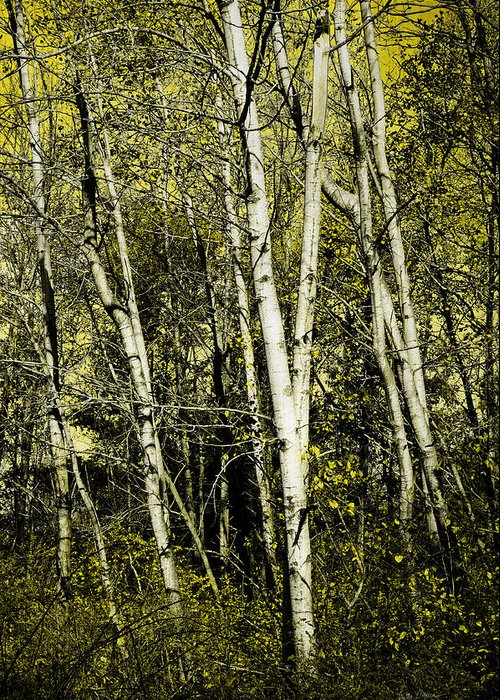 Trees Greeting Card featuring the photograph Briers And Brambles by Luke Moore