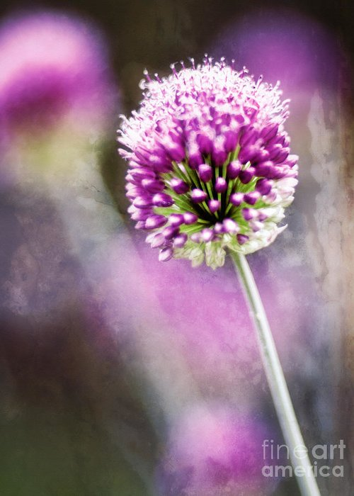 Floral Greeting Card featuring the photograph Bright Drumbstick by Lee Craig