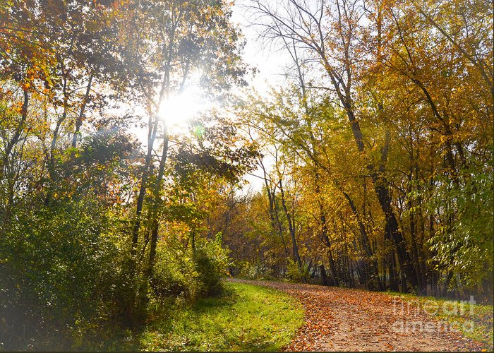 Landscape Greeting Card featuring the photograph Bright Path by Catherine Hill