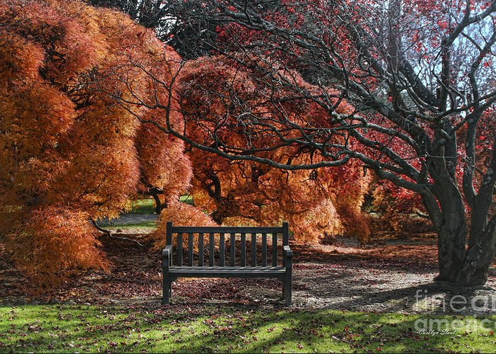 Fall Leaves Orange Bench Trees Encounter Landscape Digital Photography Canvas Prints Greeting Card featuring the photograph Brilliant Encounter by Carolyn Staut