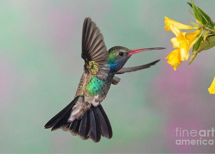 Broadbilled Hummingbird Greeting Card featuring the photograph Broad-billed Hummingbird by Jim Zipp