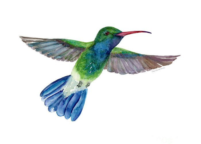 Hummer Greeting Cards