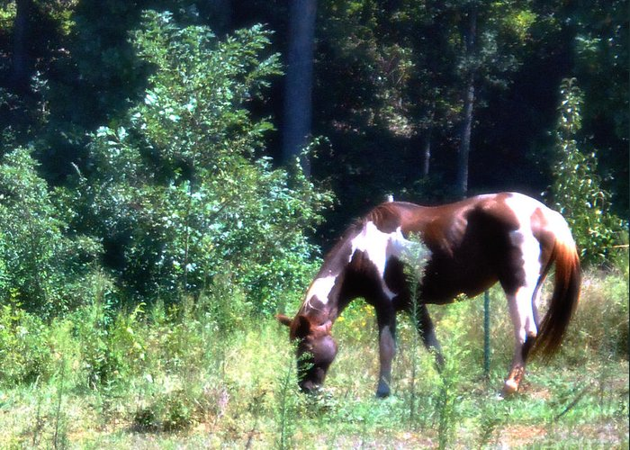 Wildlife Greeting Card featuring the photograph Brown And White Horse Grazing by Eva Thomas