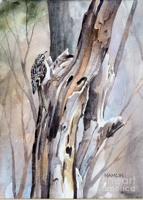 Bird Greeting Card featuring the painting Brown Creeper by Steve Hamlin