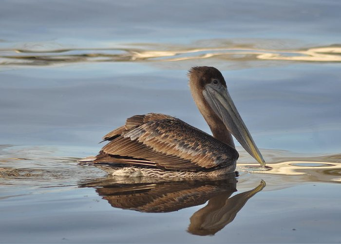 Bird Greeting Card featuring the photograph Brown Pelican by Kathy Ricca