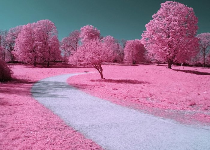 Landscape Greeting Card featuring the photograph Bubblegum Bliss by Luke Moore