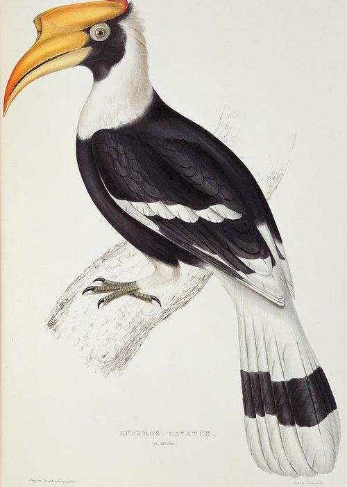 Hornbill Greeting Cards