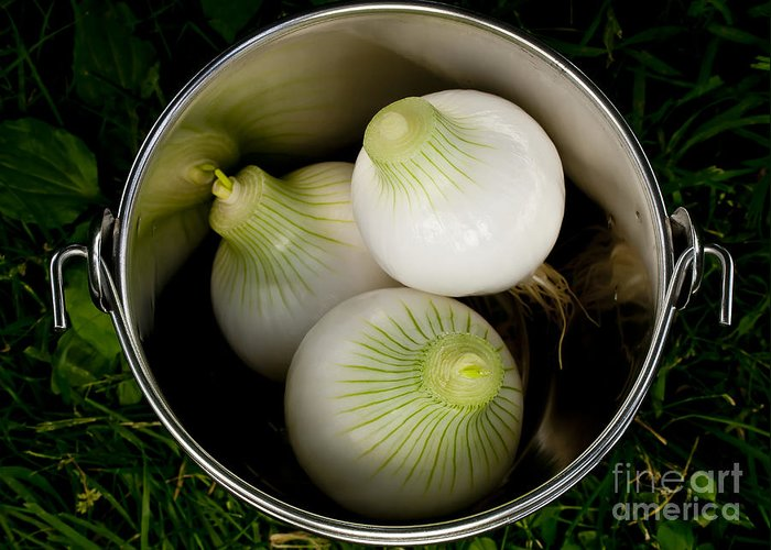 Onions Greeting Card featuring the photograph Bucket Of Onions by Wilma Birdwell