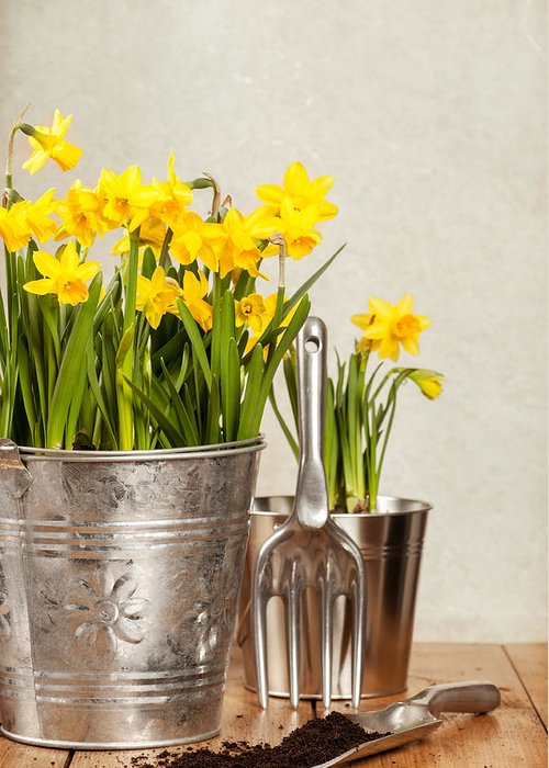 Spring Greeting Card featuring the photograph Buckets Of Daffodils by Amanda Elwell