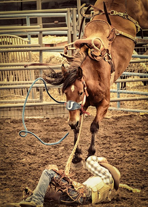 Caballo. Fence Greeting Cards