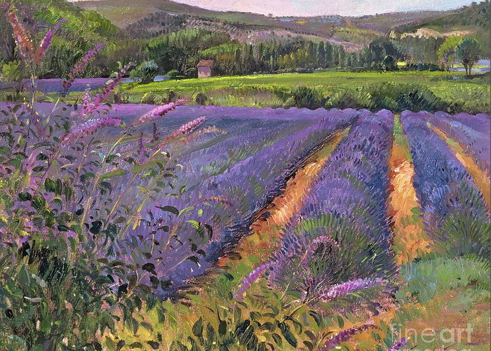 Flower; Landscape Greeting Card featuring the painting Buddleia And Lavender Field Montclus by Timothy Easton