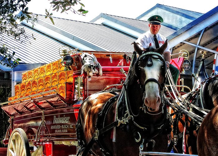Beer Greeting Card featuring the photograph Budweiser Beer Wagon by Mike Martin