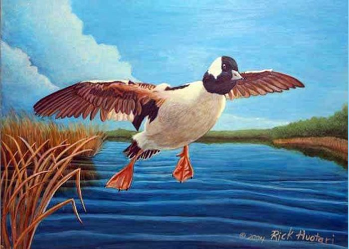 Rick Huotari Greeting Card featuring the painting Buffelhead Duck by Rick Huotari