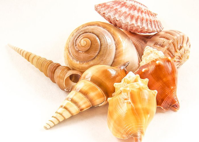 Shell Greeting Card featuring the photograph Bunch Of Shells by Jean Noren