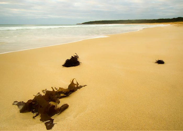 Bunker Bay Greeting Card featuring the photograph Bunker Bay - Western Australia by Daniel Carr