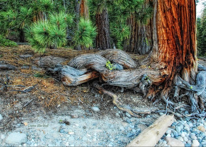 Lake Tahoe Greeting Card featuring the photograph Burly by Donna Blackhall