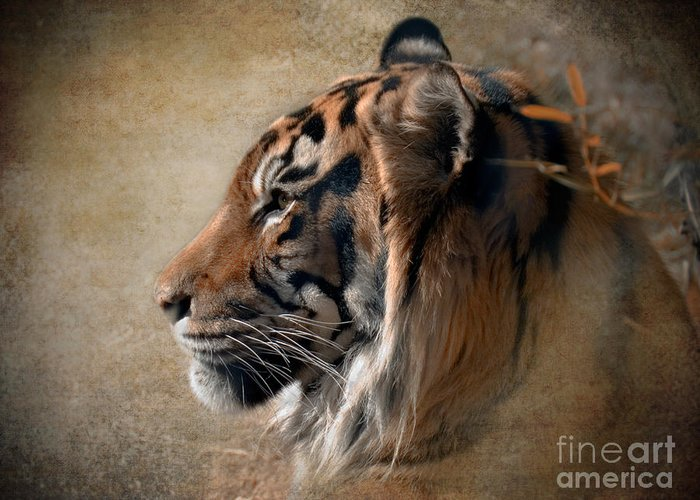 Tiger Greeting Card featuring the photograph Burning Bright by Betty LaRue